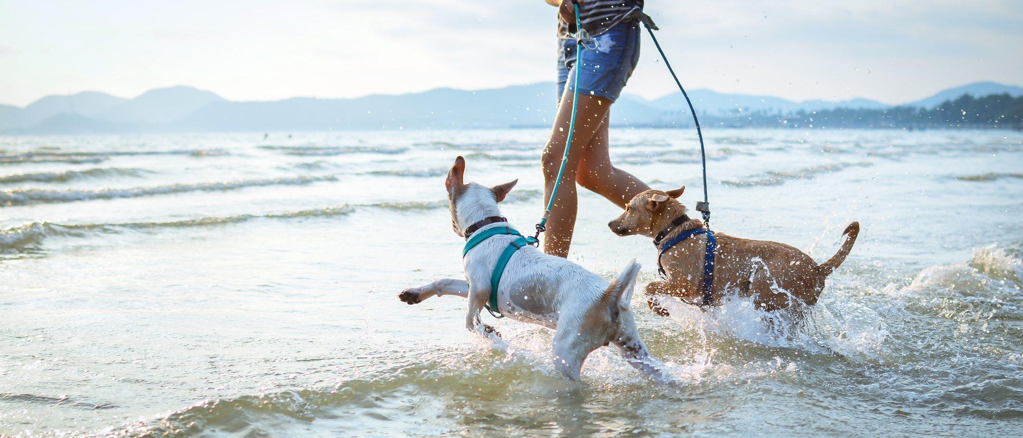 Ejercicio para perros adultos: trucos y consejos