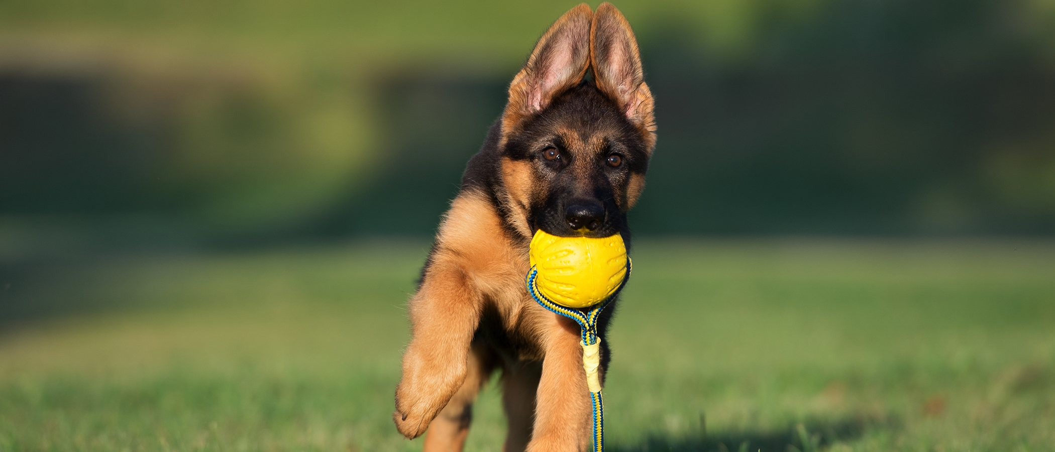 Beneficios del ejercicio físico para tu perro