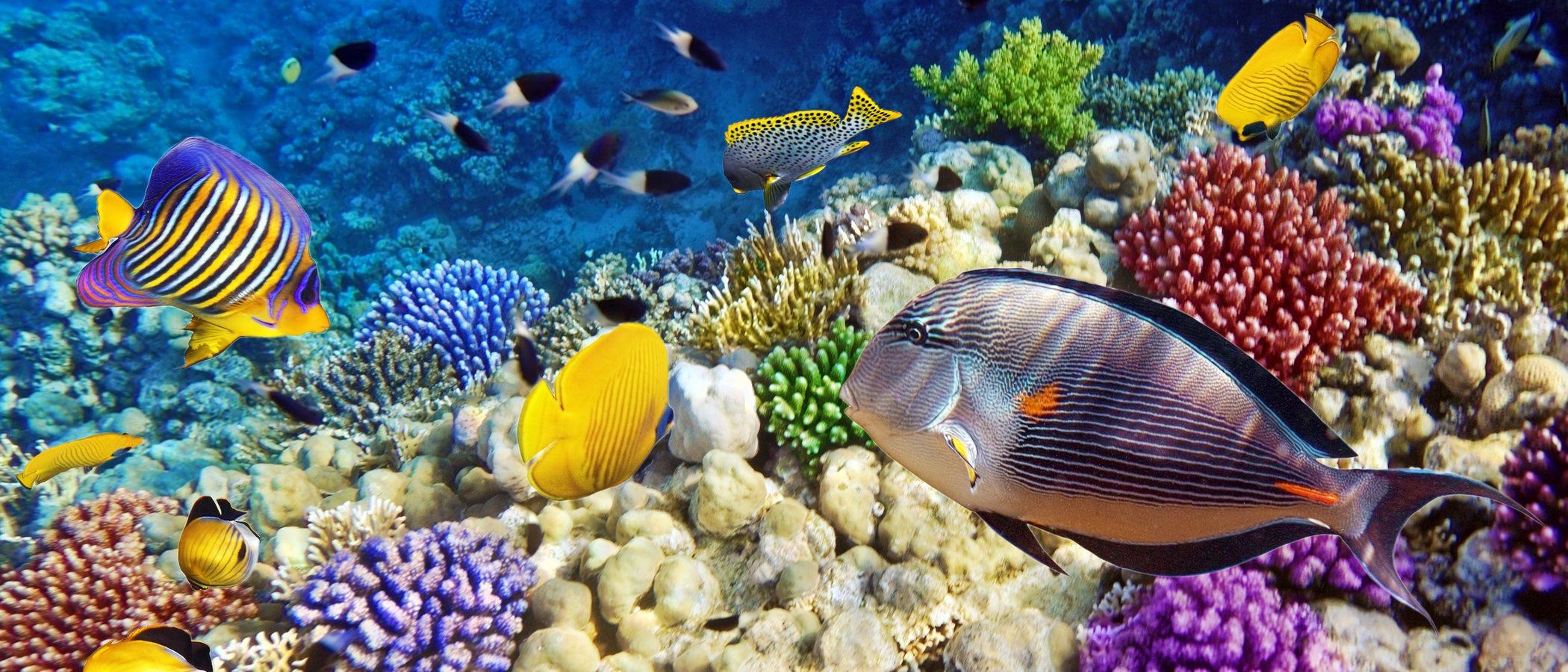 ¿Cuántos años vive un pez?