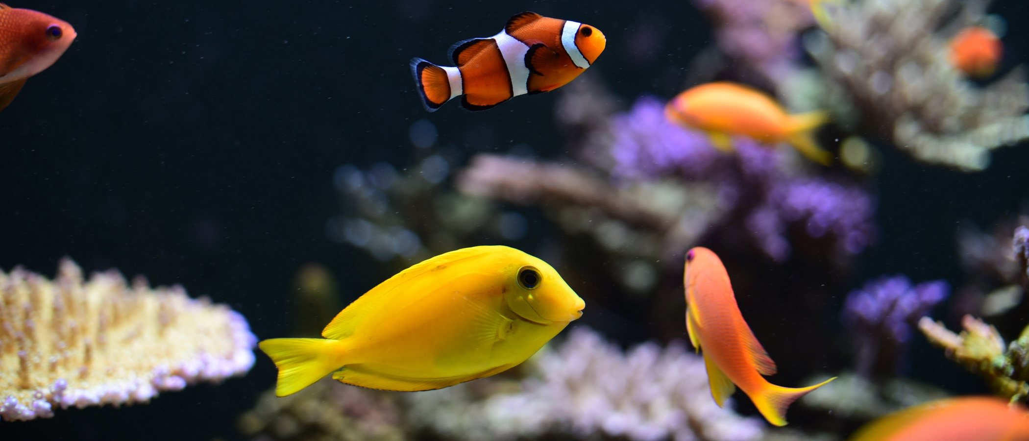 ¿Cuánto tiempo pueden estar los peces sin comer?