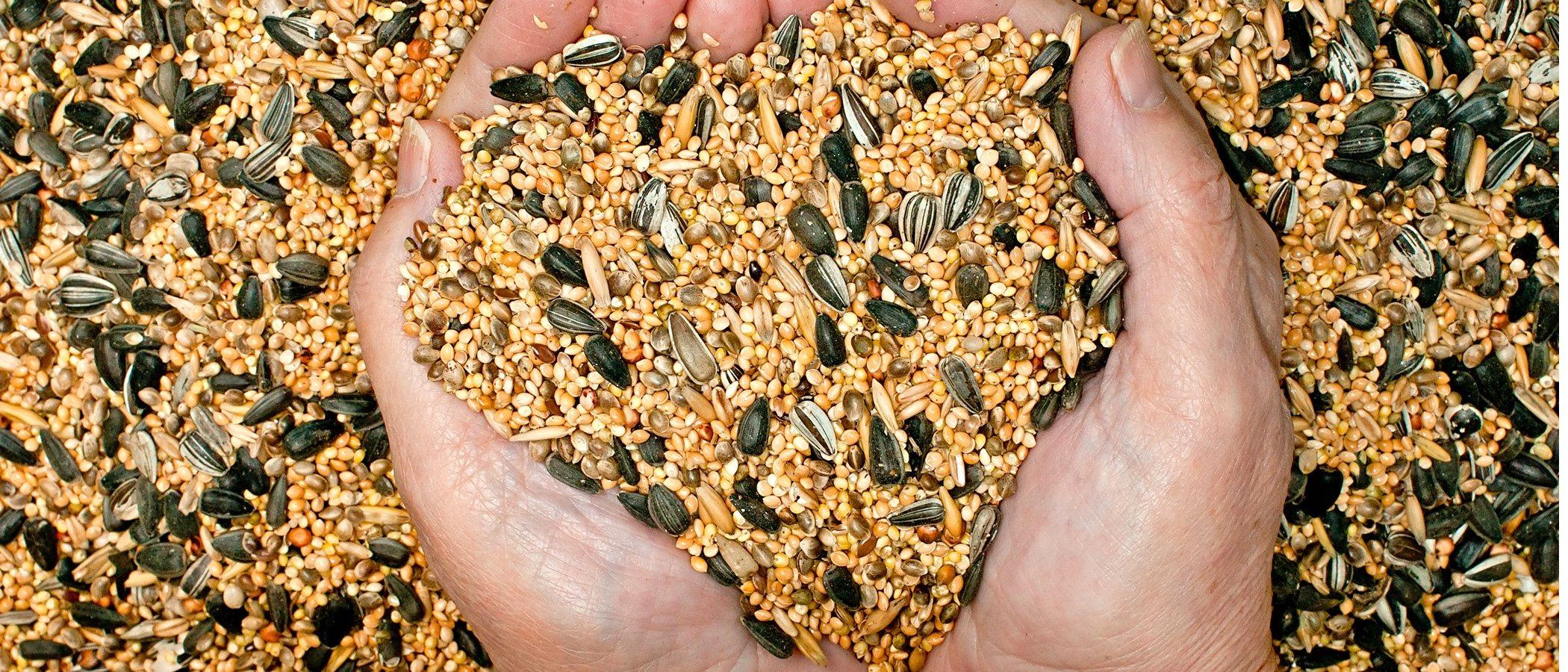 Tipos de semillas para pájaros domésticos