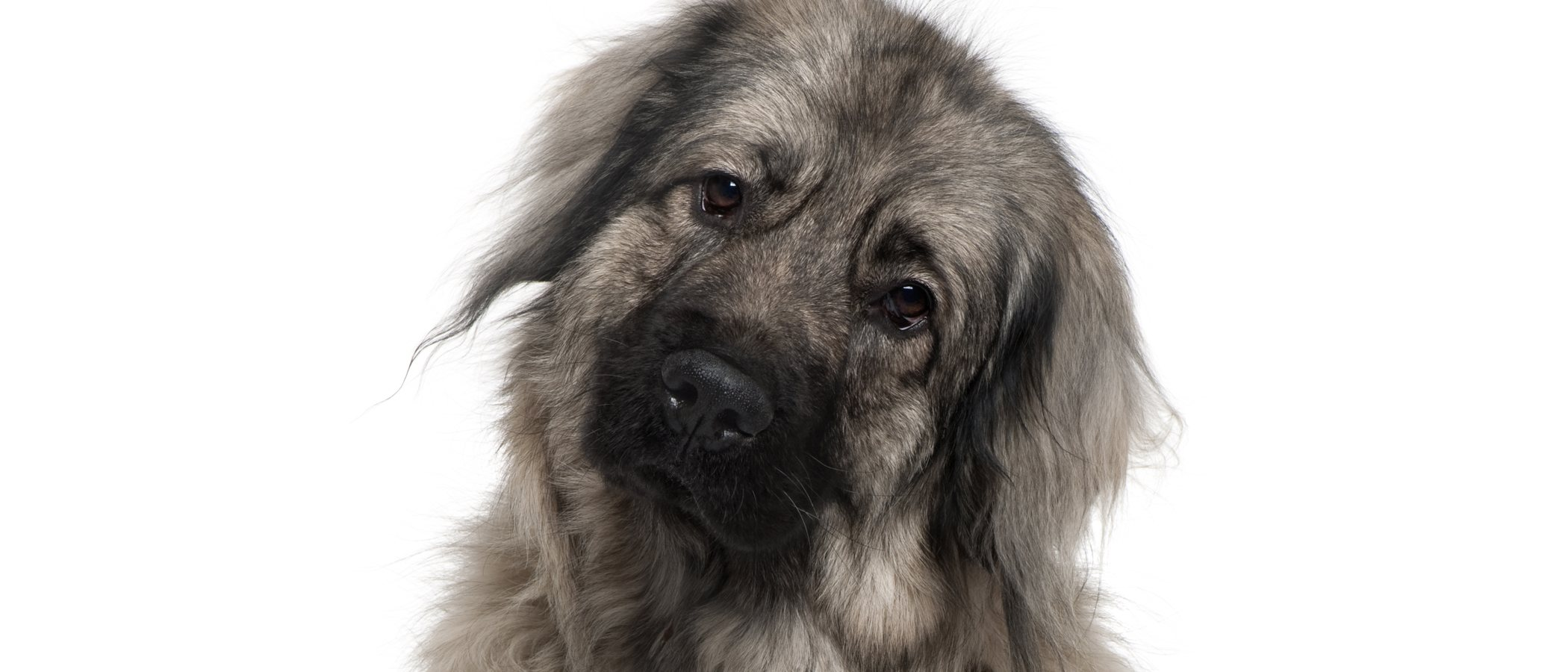 Razas de perro: Pastor Yugoslavo