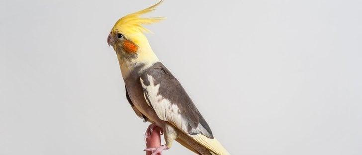 parásito de los propagados al ser comido por pájaros