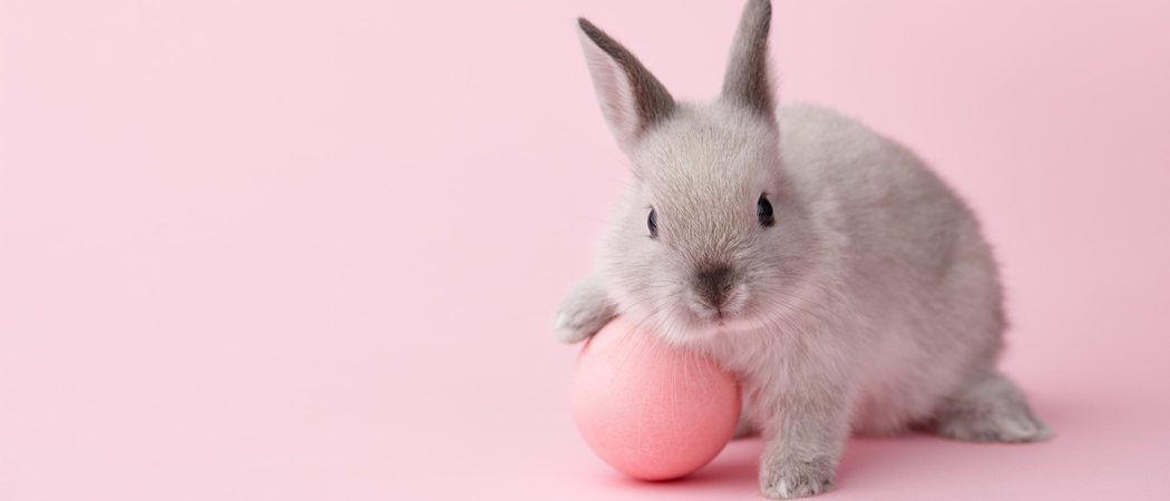 Jugar con un conejo: trucos e ideas originales