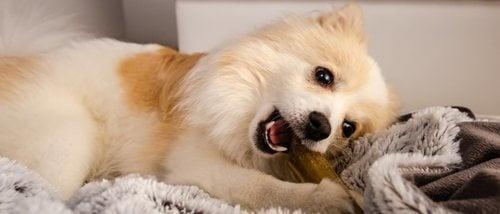 Sarro en perros: formas de eliminarlo