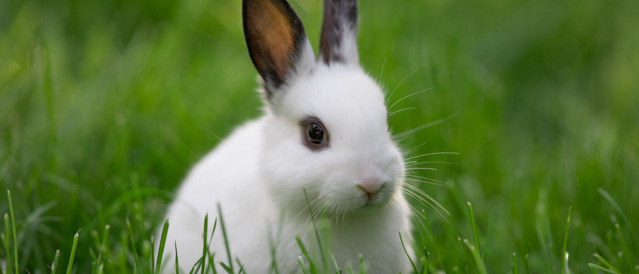 Enfermedades comunes en conejos