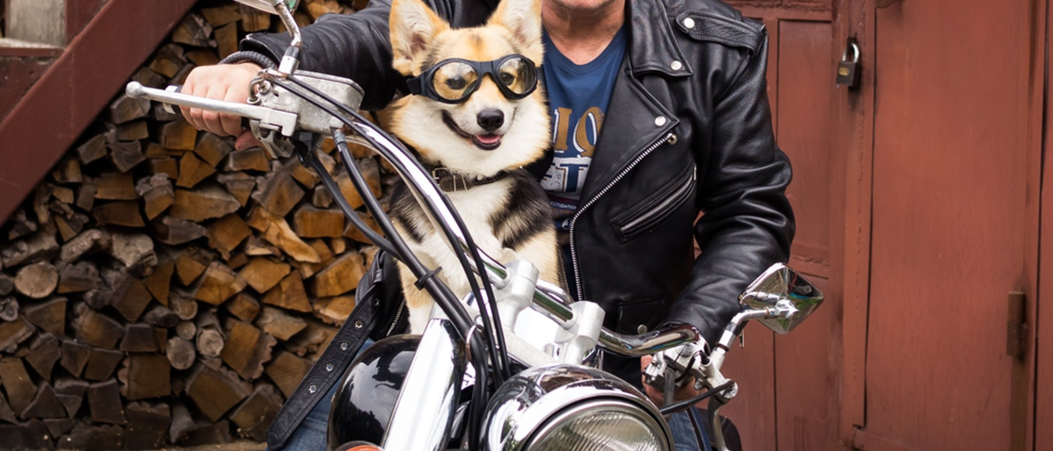 Cómo viajar con los perros en moto