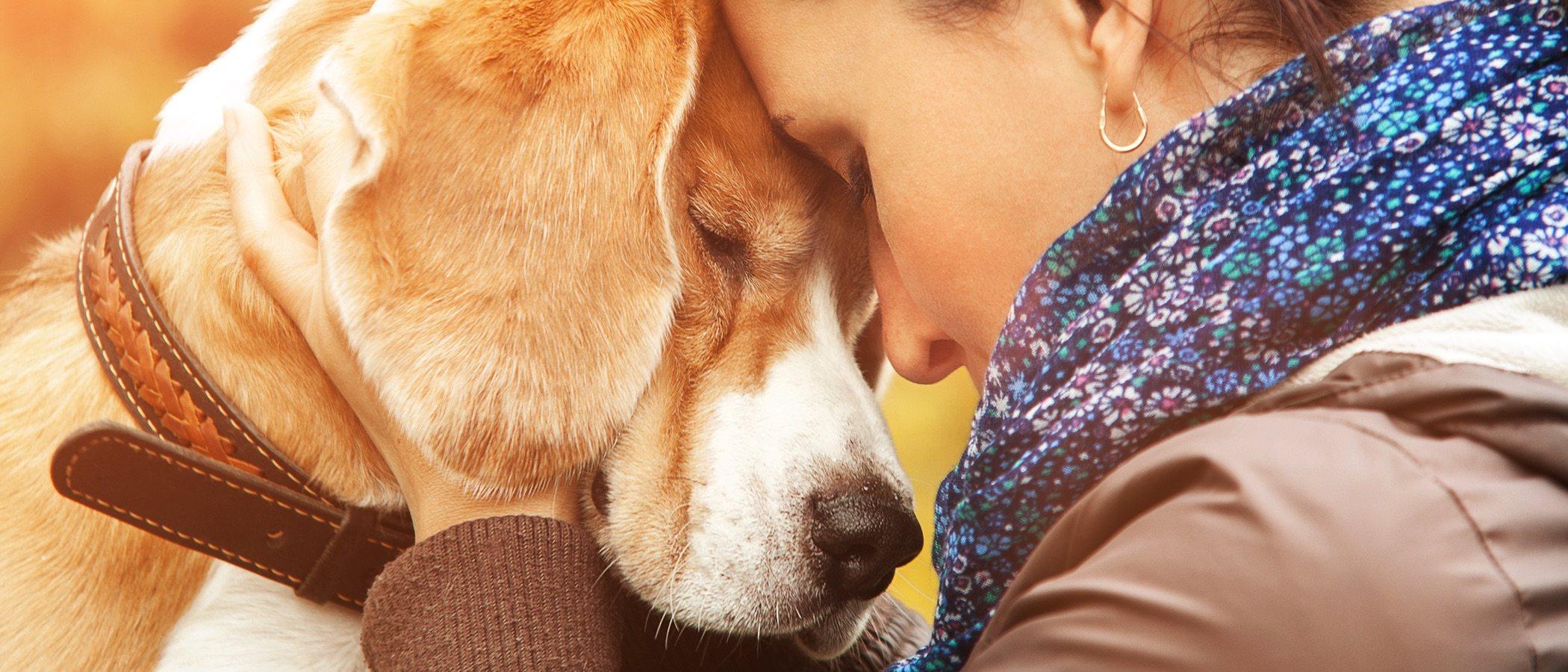 La educación de los perros: aspectos más relevantes