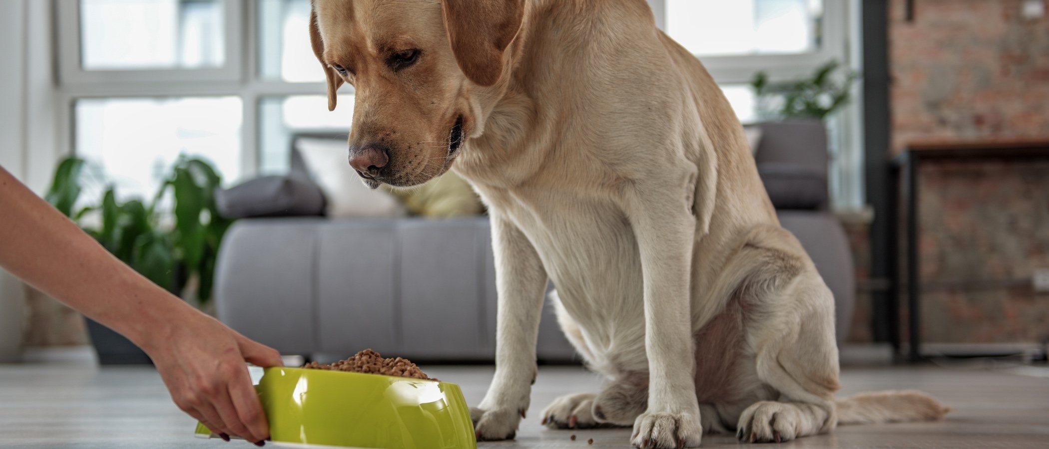Tipos de pienso para tu perro
