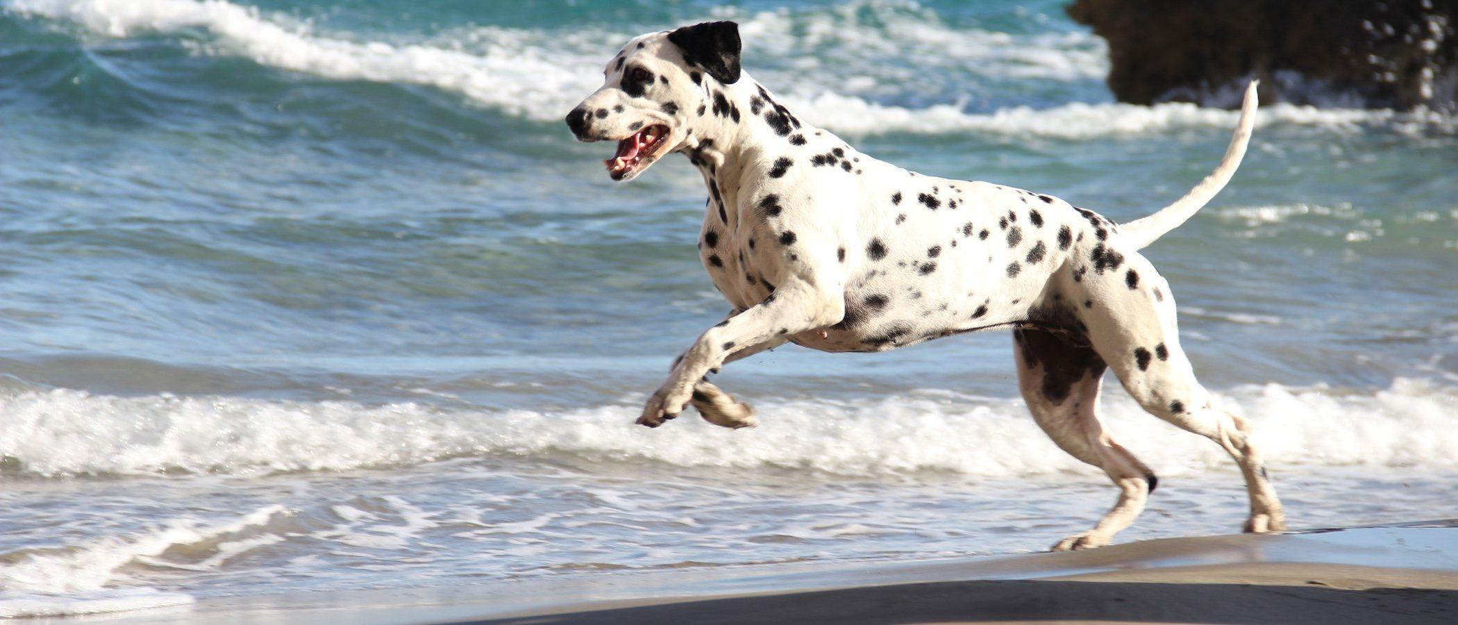 Playas a las que se puede ir con perros en España