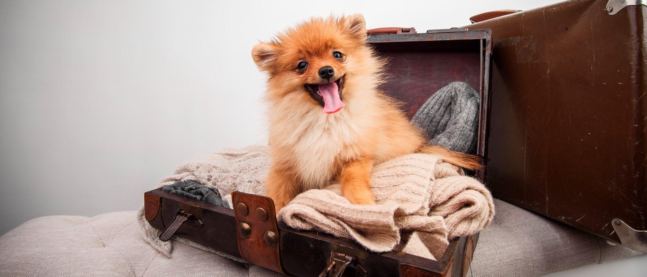 Residencias, hoteles y alojamientos para perros: todo lo que necesitas saber