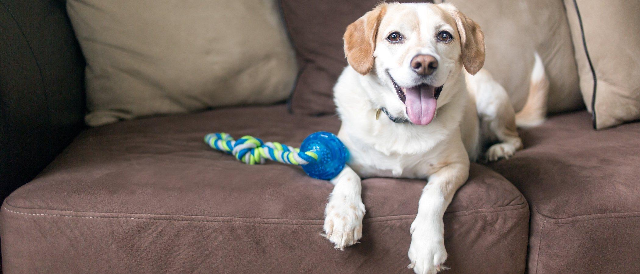 Juguetes para perros según la edad