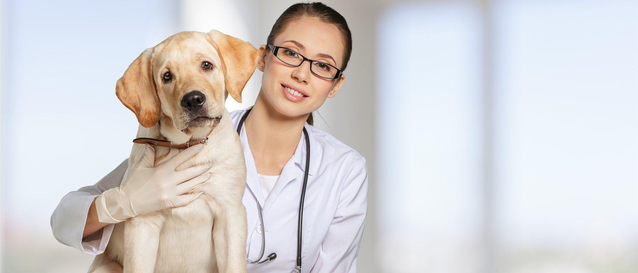 Cuándo llevar a tu cachorro al veterinario por primera vez