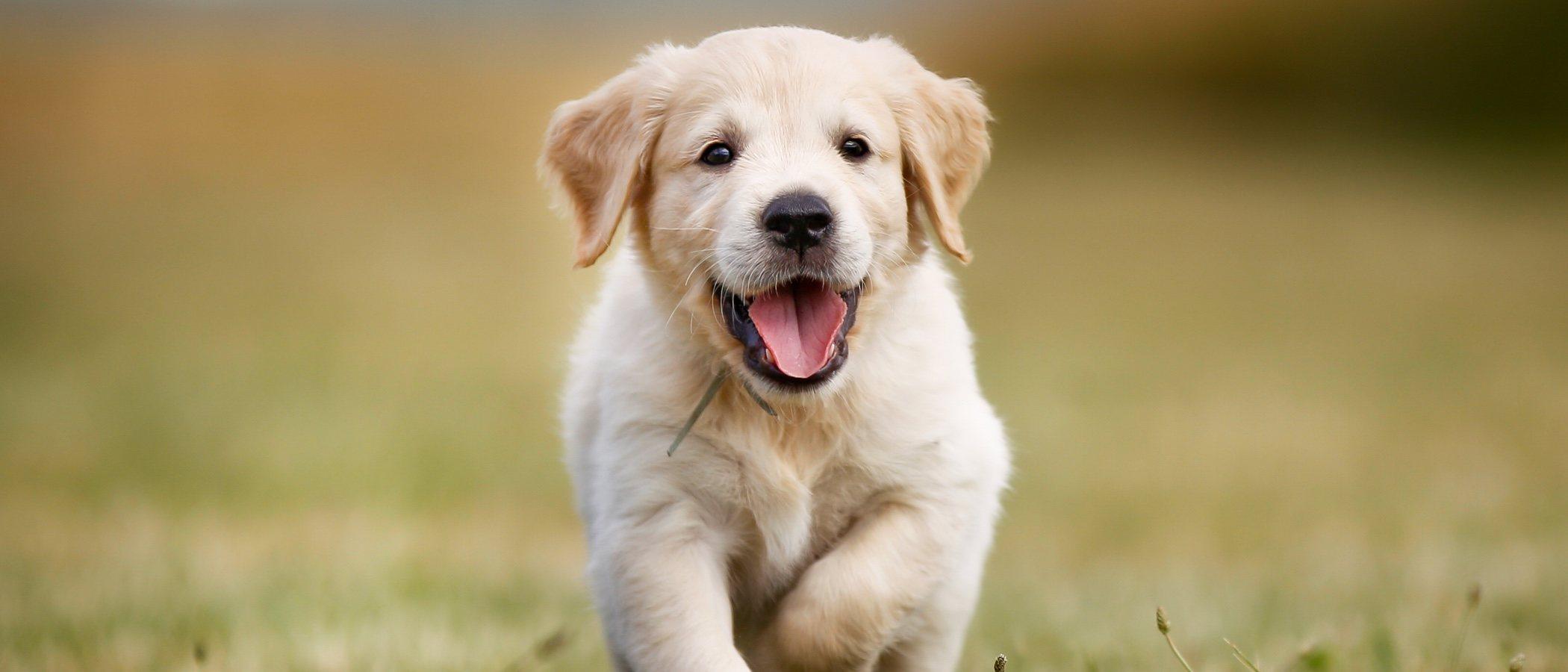 Tipos de parásitos más comunes en perros