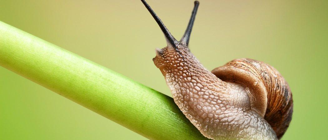 Tener caracoles como mascota: aspectos a tener en cuenta