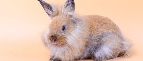 Estreñimiento en conejos: causas y formas de solucionarlo
