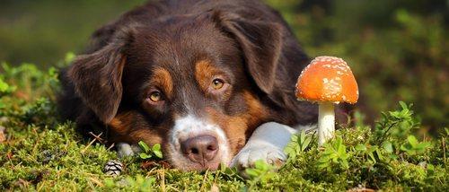 Hongos en perros: síntomas y tratamiento