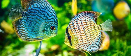 Hongos en peces: tipos y soluciones