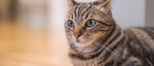 ¿Puede mi gato superar las infecciones oculares?