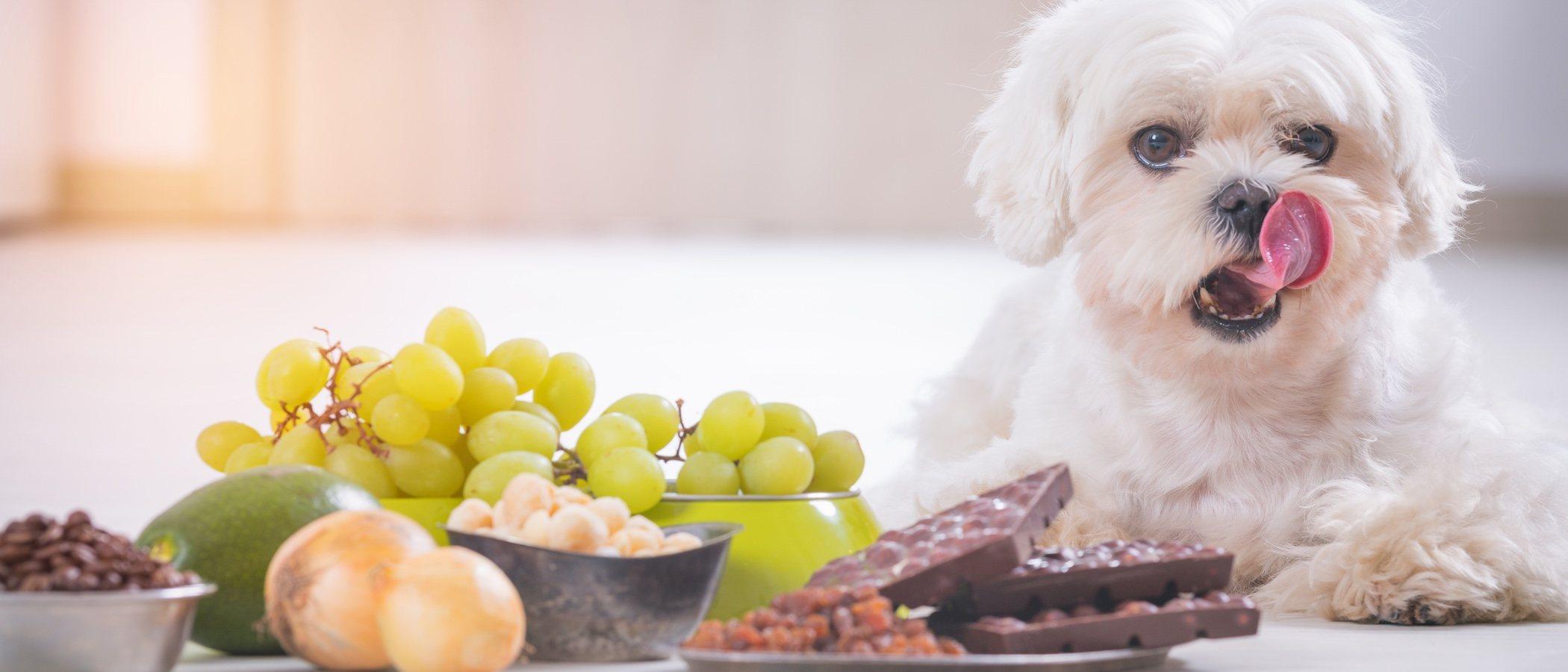 Alimentos y productos que pueden causar envenenamiento a los perros