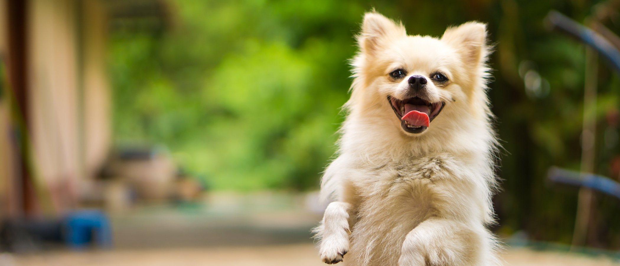 Insuficiencia renal en perros: todo lo que hay que saber