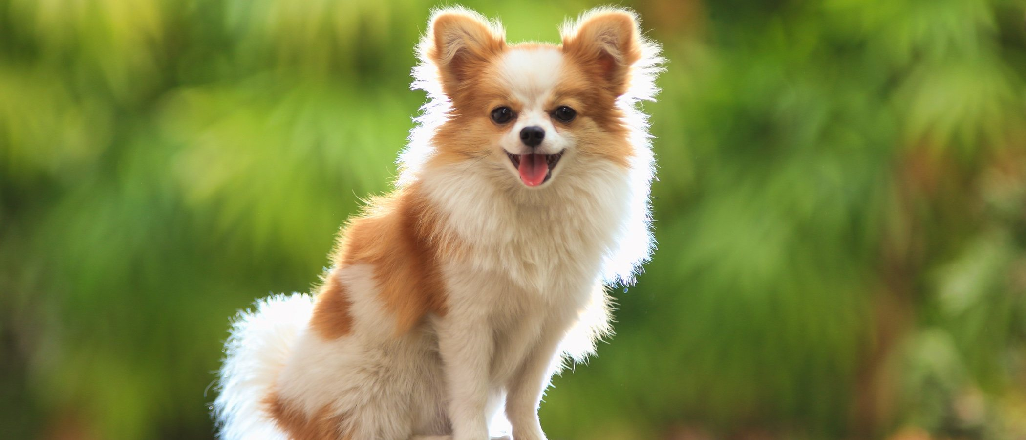 Perros mini: todo lo que necesitas saber sobre este tipo de perro