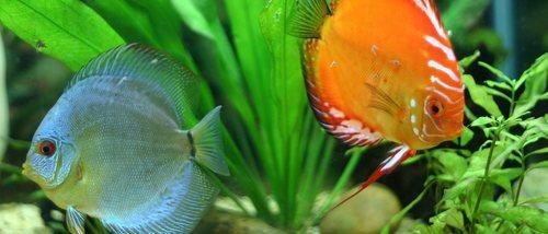 Cómo duermen los peces