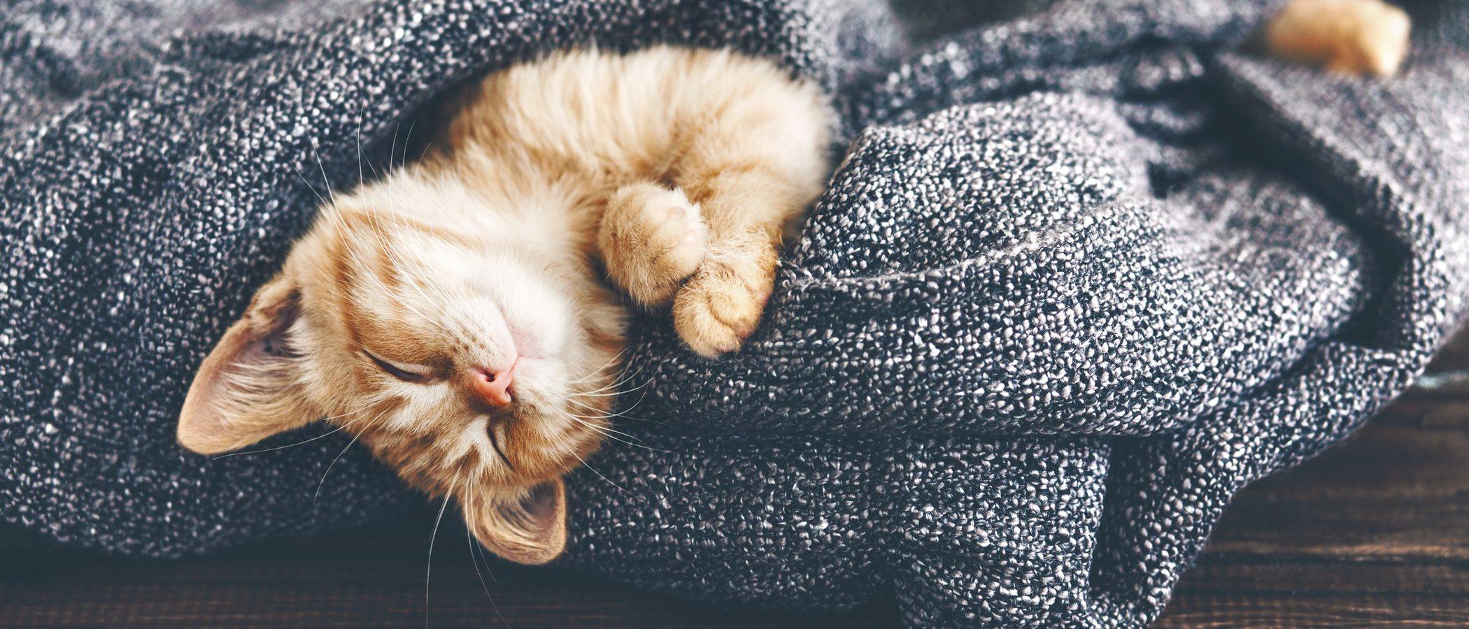 Alimentación para gatos diabéticos