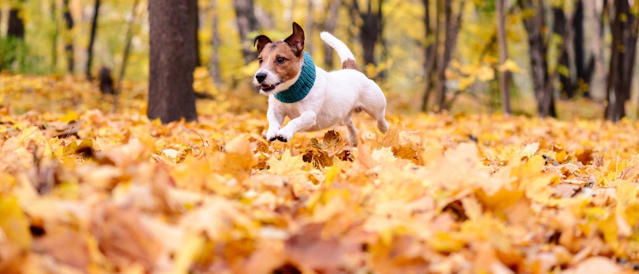 Cómo cuidar a tu perro en otoño: cuidados específicos