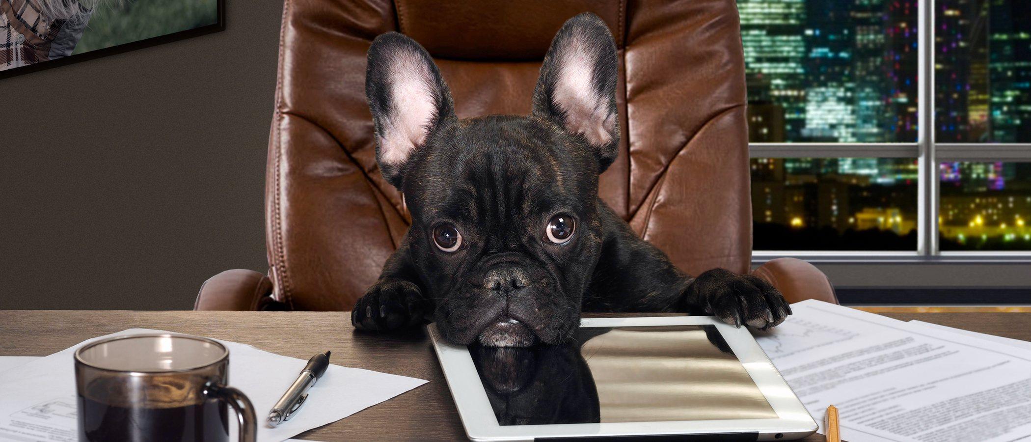 Apadrinar un perro: todo lo que necesitas saber