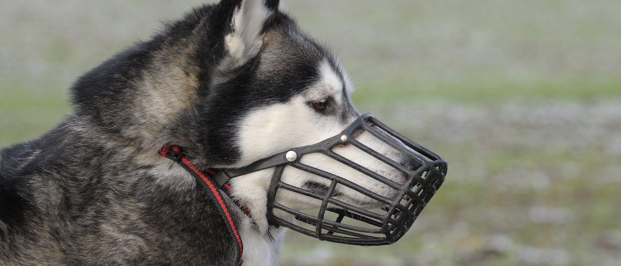 ¿Qué perros tienen que llevar bozal obligatoriamente?