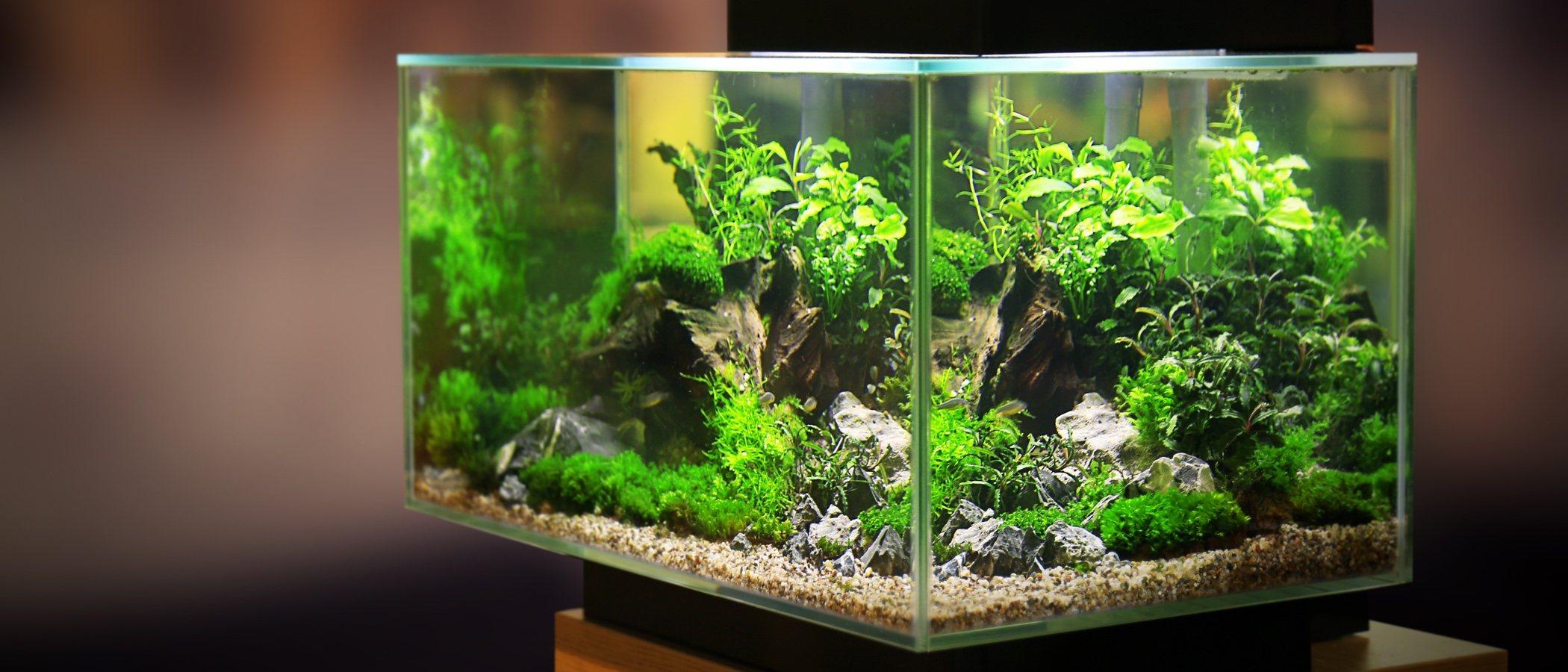 ¿Qué es la zeolita? Elemento indispensable en los acuarios