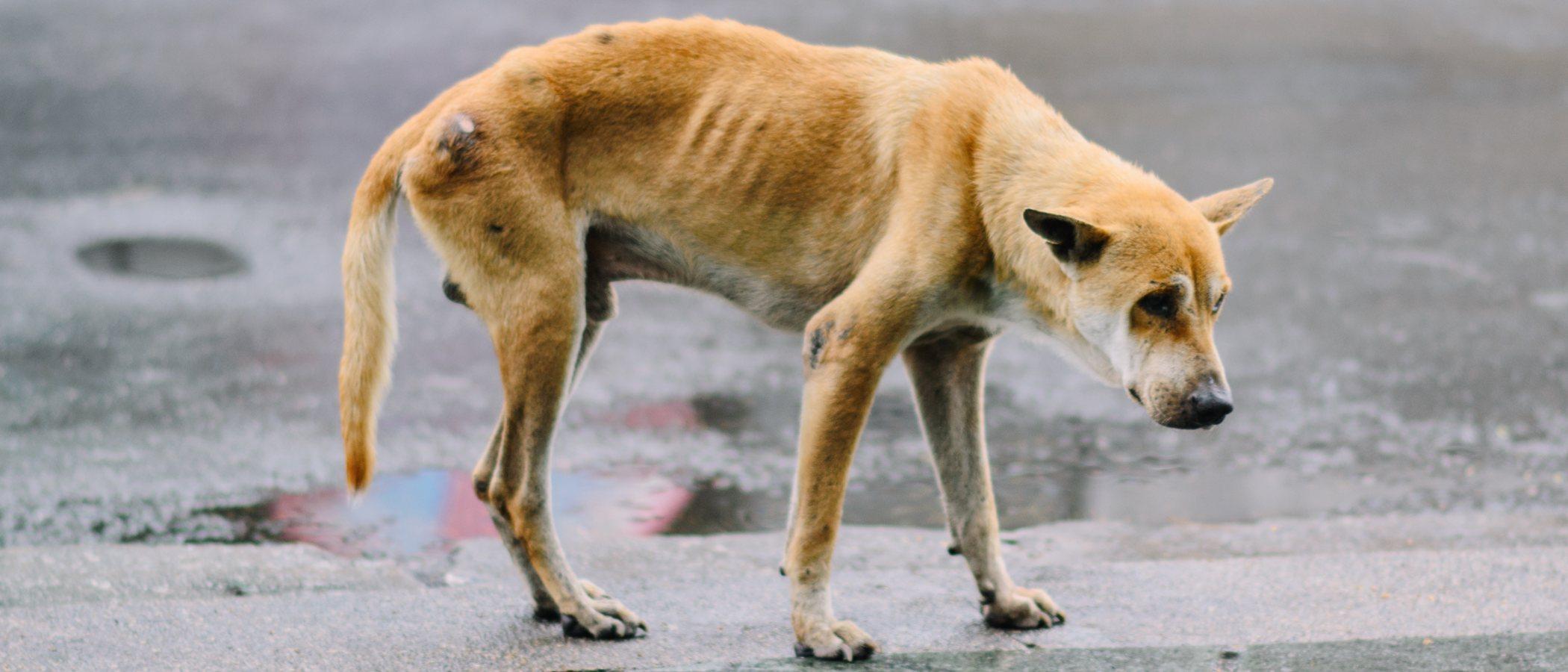 Anorexia en perros: cuidados y consejos