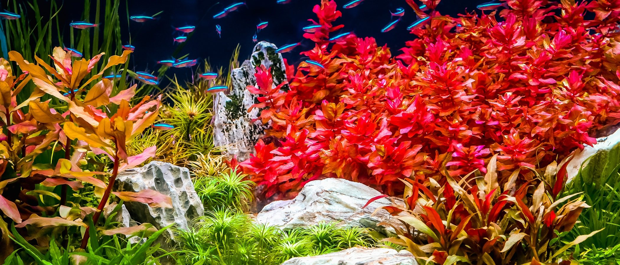 8 tipos de plantas de acuario