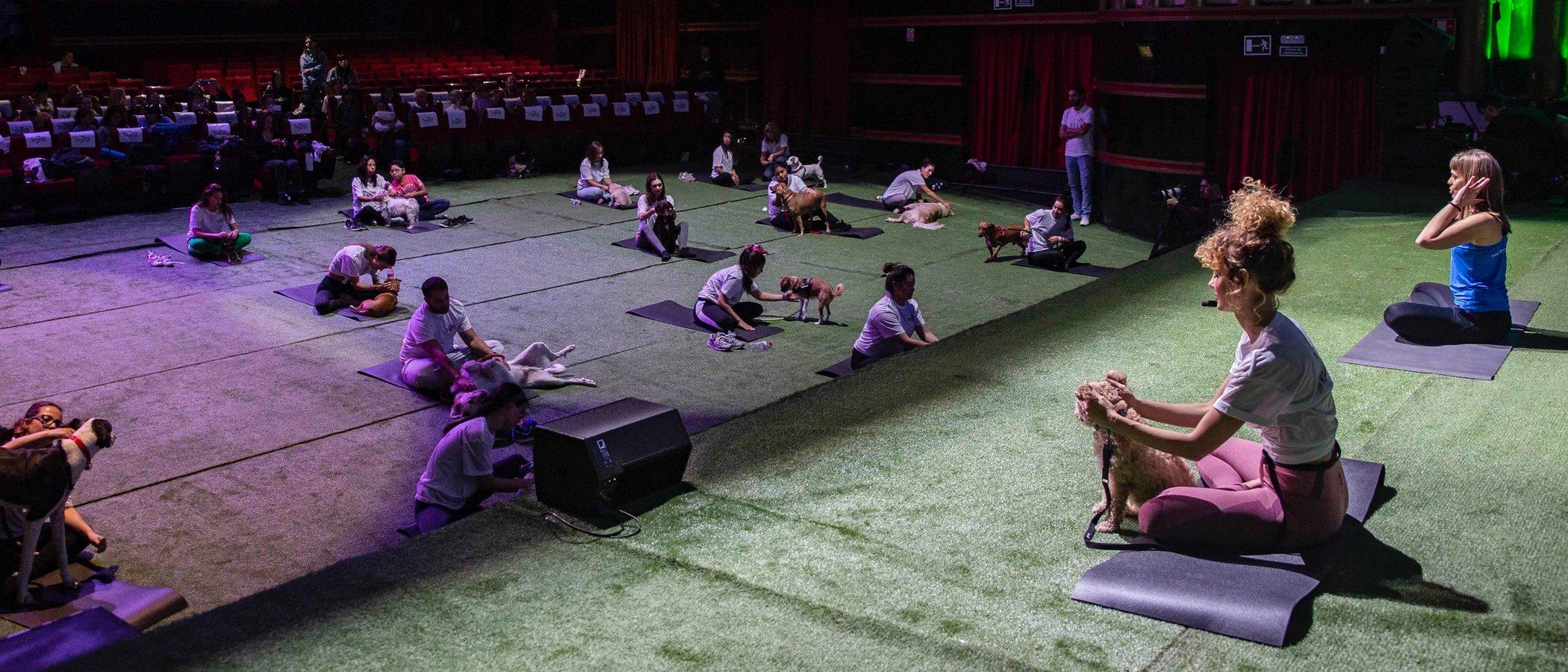 Yoga para perros: todo lo que necesitas saber para practicarlo
