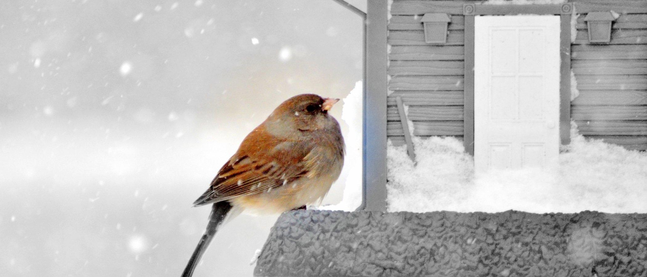 Cómo proteger a tu ave del frío: trucos y consejos