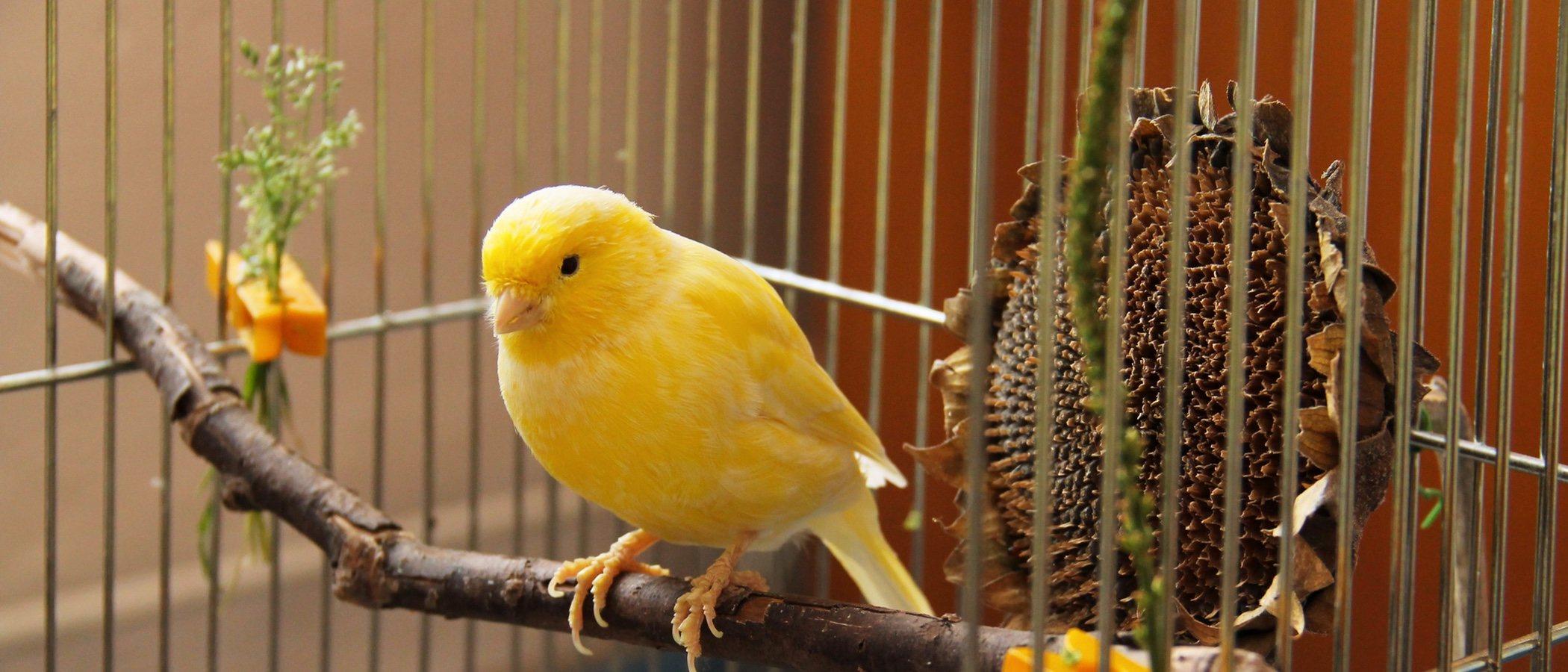 Cuánto cuesta tener un ave como mascota