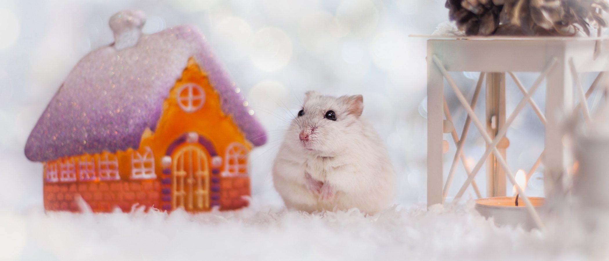 Cómo proteger a tu hámster del frío