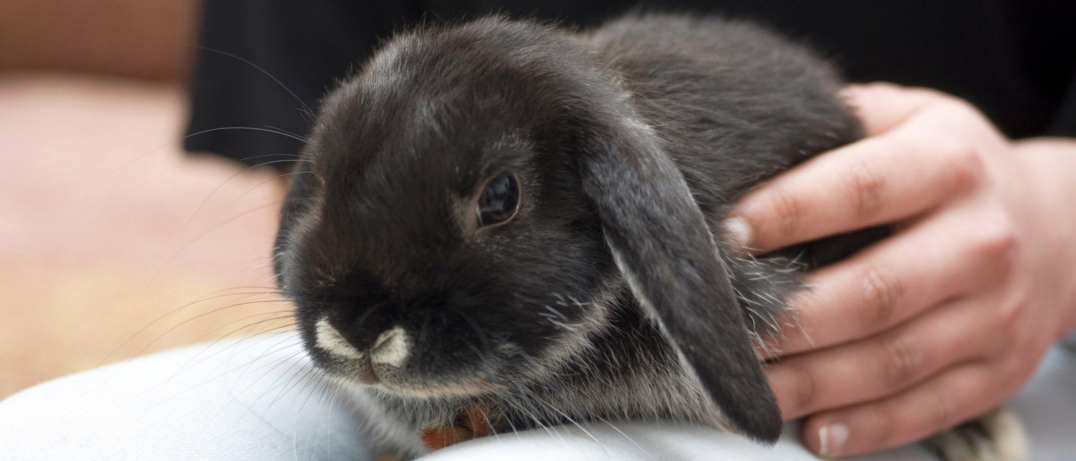 Cuánto cuesta tener un conejo como mascota
