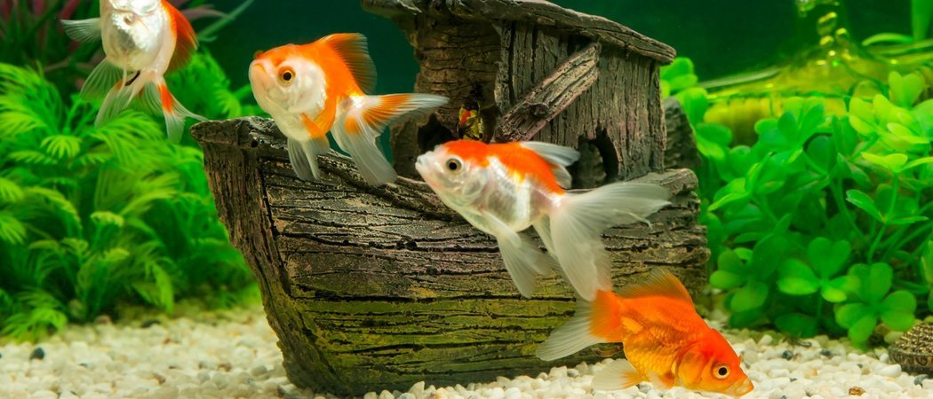 Aquascaping o paisajismo acuático: todo lo que necesitas saber