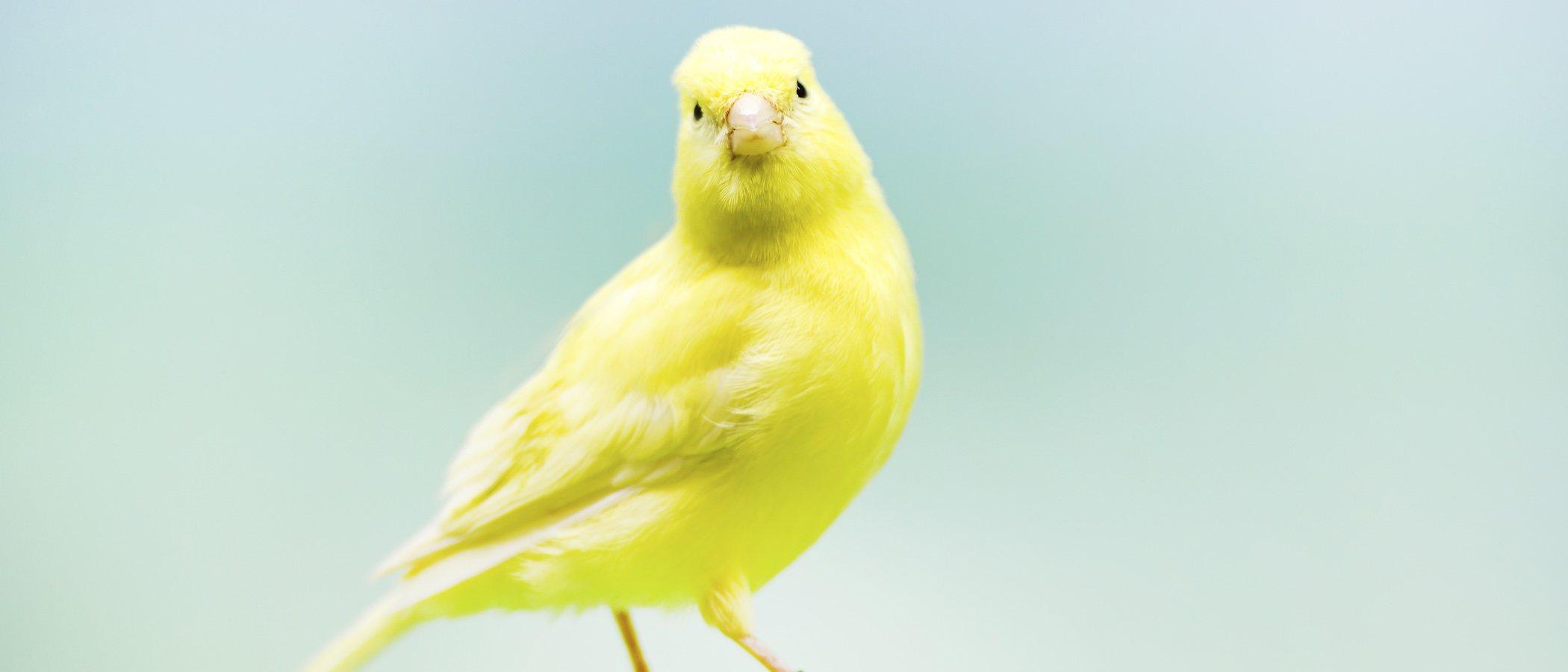 Tener un pájaro suelto en casa: trucos y precauciones