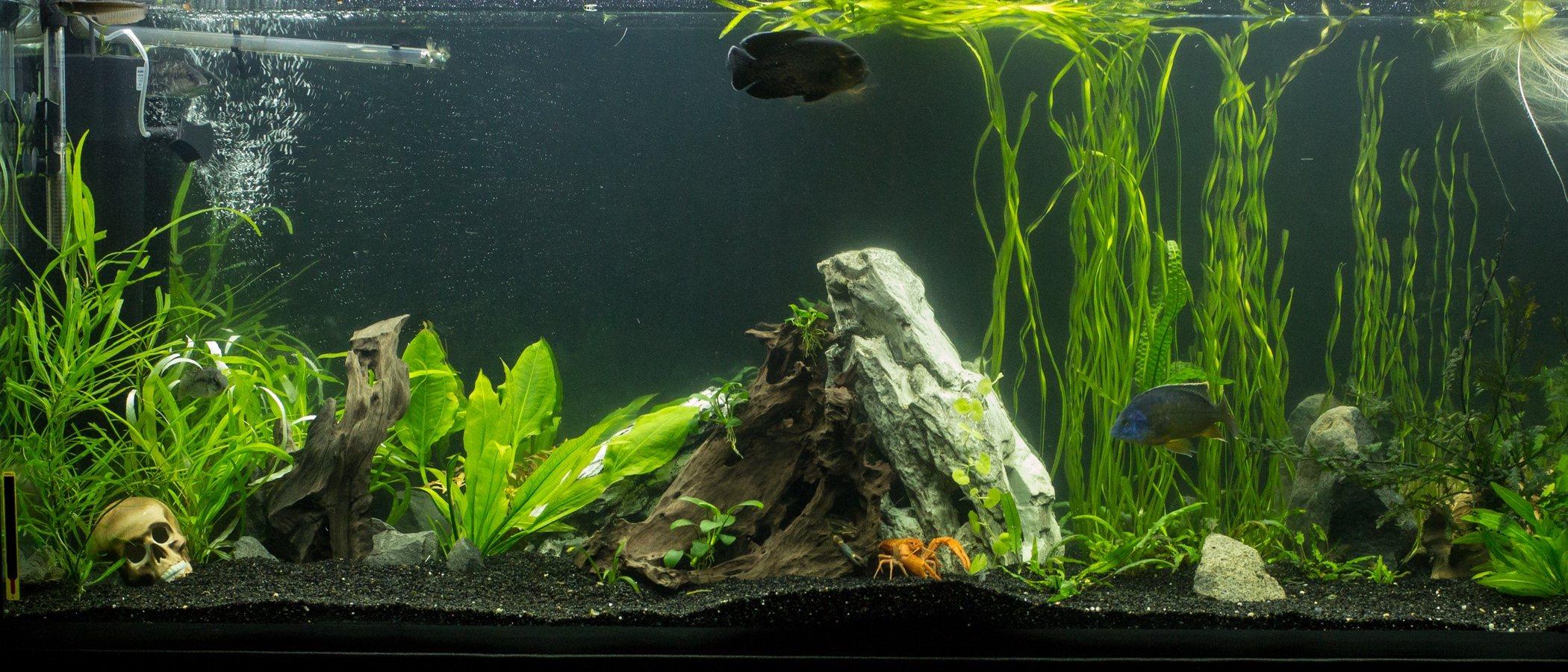 Cómo cambiar el agua del acuario: consejos