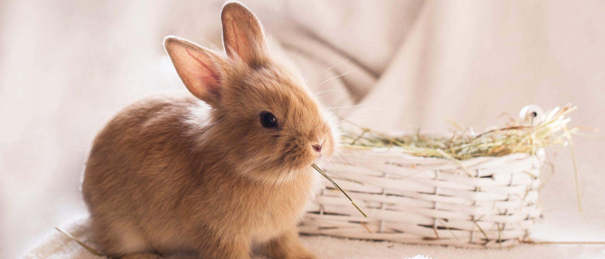 Tipos de heno para conejos