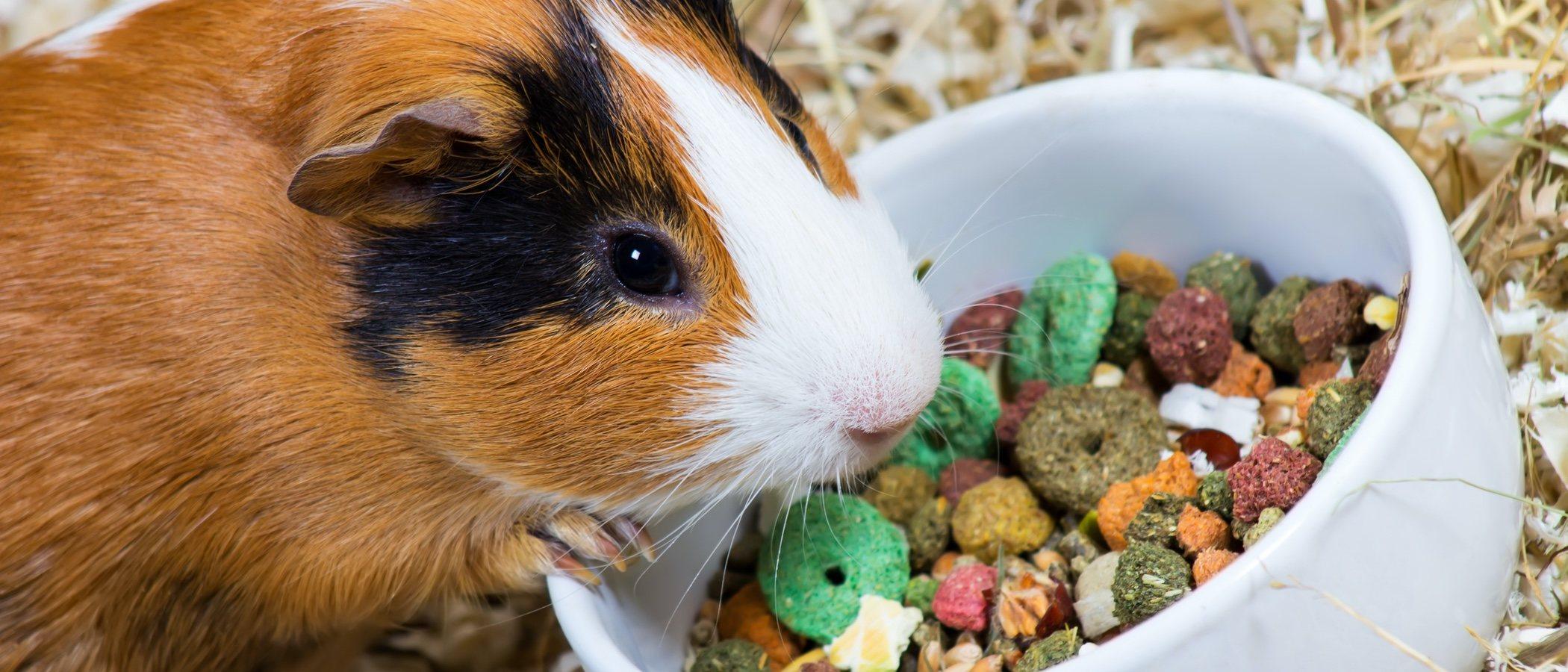 La alimentación de la cobaya: todo lo que necesitas saber