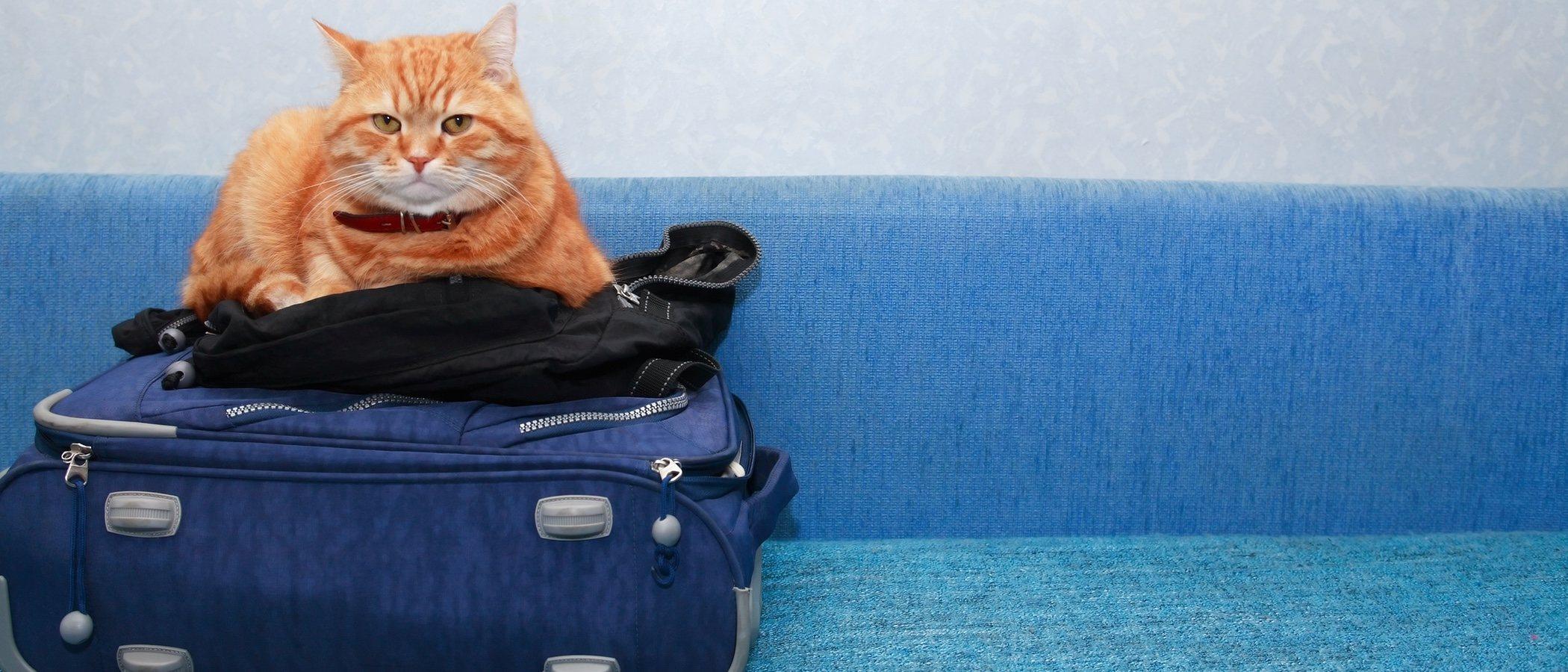 Cómo viajar con tu gato en avión