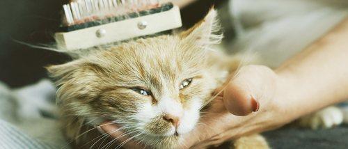 Tipos de cepillos para gatos