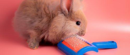 Accesorios para conejos