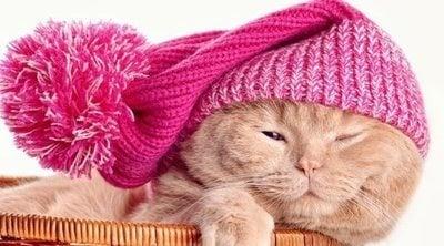 Hipotermia en gatos: aprende a detectarla y ponerle remedio