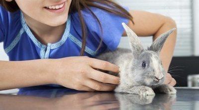 Cómo cortarle las uñas a un conejo