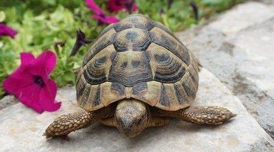 Mi tortuga no come, ¿cuál es la razón?